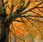 See the Fall Colors at Meadowbrook Resort & Dells Packages in Wisconsin Dells
